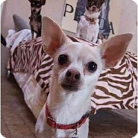 Adopt A Pet :: Princess Keiko - Chimayo, NM