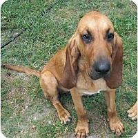 Adopt A Pet :: Maggie - Carrollton, GA