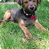 Adopt A Pet :: RI TRAVIS - W. Warwick, RI