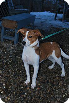 Beagle Mix Dog for adoption in Berea, Ohio - Zook