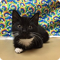 Adopt A Pet :: Potter - Coral Springs, FL
