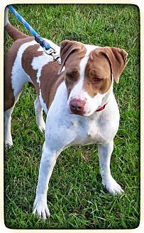 Terrier (Unknown Type, Medium) Mix Dog for adoption in Charlotte, North Carolina - Linda