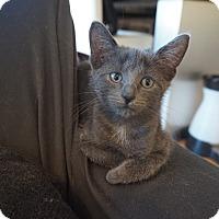 Adopt A Pet :: Beth, Meg and Jo - Brooklyn, NY