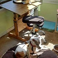Adopt A Pet :: Sienna - Mishawaka, IN