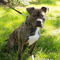 Adopt A Pet :: Vegas - Cheyenne, WY