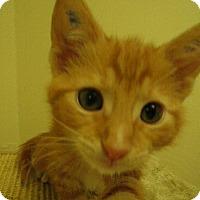 Adopt A Pet :: Citrus - Milwaukee, WI