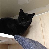 Adopt A Pet :: JOEY - Ridge, NY