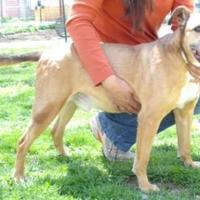 Adopt A Pet :: Buddy - Wichita, KS