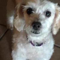 Adopt A Pet :: Marley - Prole, IA