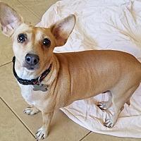 Adopt A Pet :: Lady Lay - Phoenix, AZ