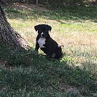 Adopt A Pet :: Joplin - Jerseyville, IL