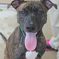 Adopt A Pet :: PIXIE - Clayton, NJ
