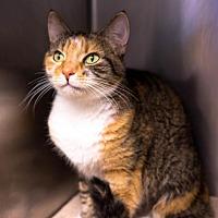 Adopt A Pet :: Harlow - Birdsboro, PA