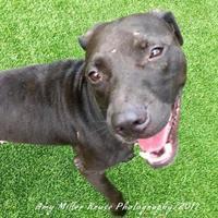 Adopt A Pet :: Denny - Land O'Lakes, FL