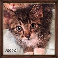 Adopt A Pet :: FRODO - Winnipeg, MB