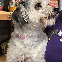 Adopt A Pet :: Ruth - Phoenix, AZ