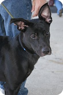 Labrador Retriever Mix Dog for adoption in Rockaway, New Jersey - Roosevelt