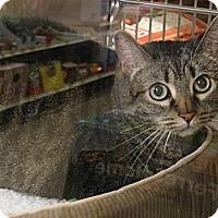 Adopt A Pet :: TINK - Diamond Bar, CA