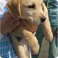 Adopt A Pet :: Quattro - Cumming, GA