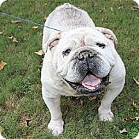 Adopt A Pet :: Shelton - Winder, GA