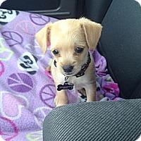 Adopt A Pet :: Aiden - Oceanside, CA