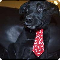 Adopt A Pet :: Scotch - Windham, NH