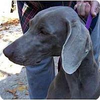 Adopt A Pet :: Polly  **ADOPTED** - Eustis, FL