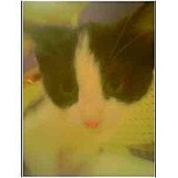 Adopt A Pet :: Carmelita - Owasso, OK