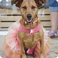 Adopt A Pet :: Lillian - Knoxville, TN