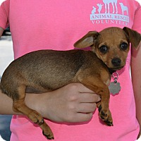 Adopt A Pet :: Kendall - Simi Valley, CA