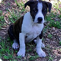 Adopt A Pet :: Zack in Texarkana, TX - Texarkana, TX