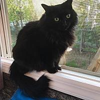 Adopt A Pet :: MEKHYLA - Hamilton, NJ