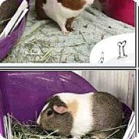 Adopt A Pet :: *Urgent* Zoey & Miley - Fullerton, CA