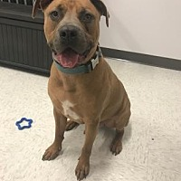 Adopt A Pet :: Romeo - Binghamton, NY