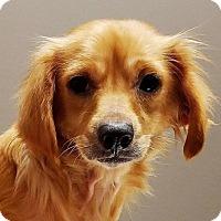 Adopt A Pet :: Bella - Kansas City, MO