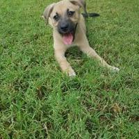 Adopt A Pet :: Camee - Scottsdale, AZ
