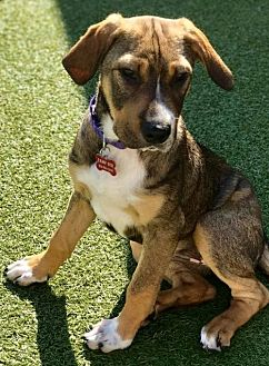 Terrier (Unknown Type, Medium) Mix Dog for adoption in Whitestone, New York - Selena Kyle (Diana)