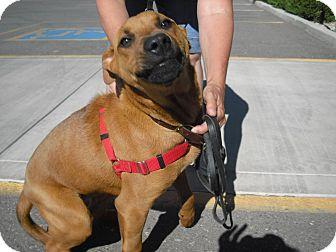 Retriever (Unknown Type) Mix Dog for adoption in Wickenburg, Arizona - Jasper