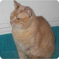 Adopt A Pet :: Obie - Orillia, ON