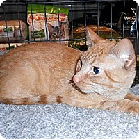 Adopt A Pet :: Vincent - College Station, TX