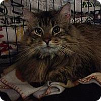 Adopt A Pet :: Baxter - Pittstown, NJ