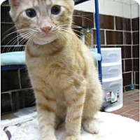 Adopt A Pet :: Scotty - Centerburg, OH