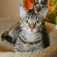 Adopt A Pet :: Lucy - Capshaw, AL