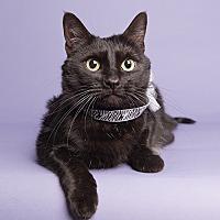 Adopt A Pet :: Annie - Wilmington, DE