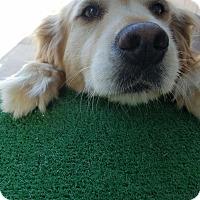 Adopt A Pet :: Coco - Cerritos, CA
