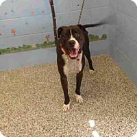 Adopt A Pet :: LUCAS - San Bernardino, CA