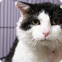 Adopt A Pet :: Amashi - Muskegon, MI