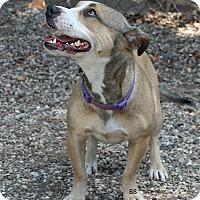 Adopt A Pet :: Frannie - Santa Barbara, CA