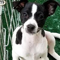 Adopt A Pet :: Joplin - San Antonio, TX