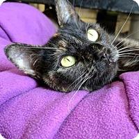 Adopt A Pet :: Sheila - Lowell, MA